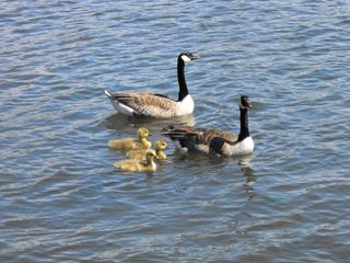 atención psicológica a familias